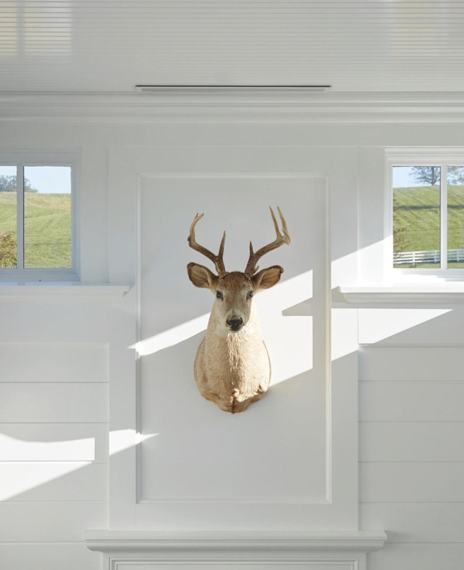 Deer head mounted on a wall