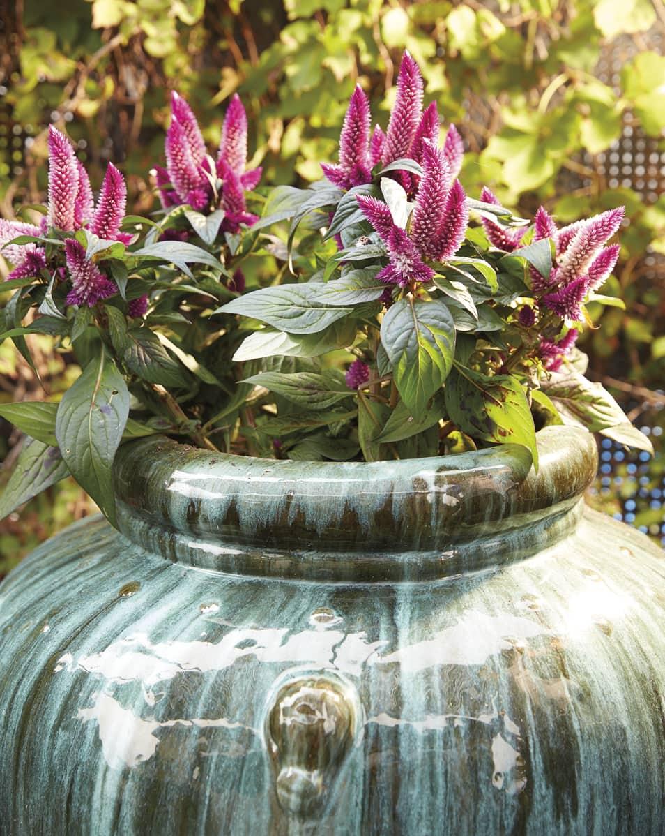 Beautiful purple plants in an outdoor planter